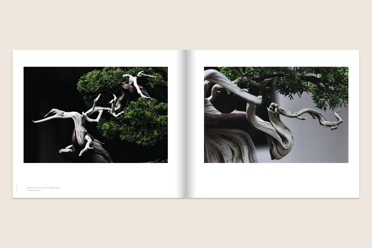 02_Bonsai_PhotographySpread