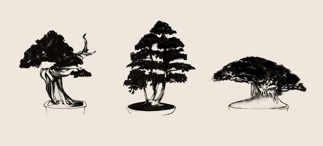 08_Bonsai_TreeIllustrations