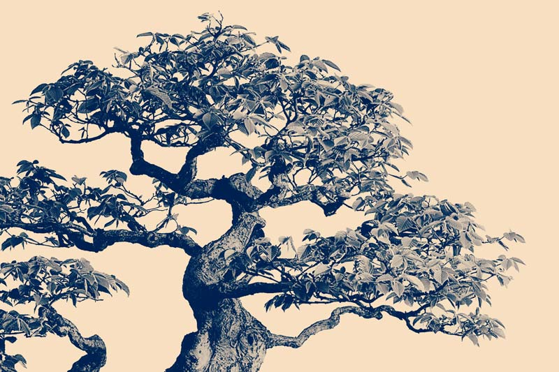 National Bonsai Foundation
